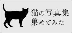 猫の写真集集めてみた特集