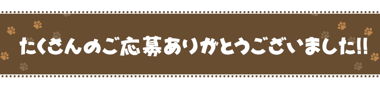 猫本レビューキャンペーン!!